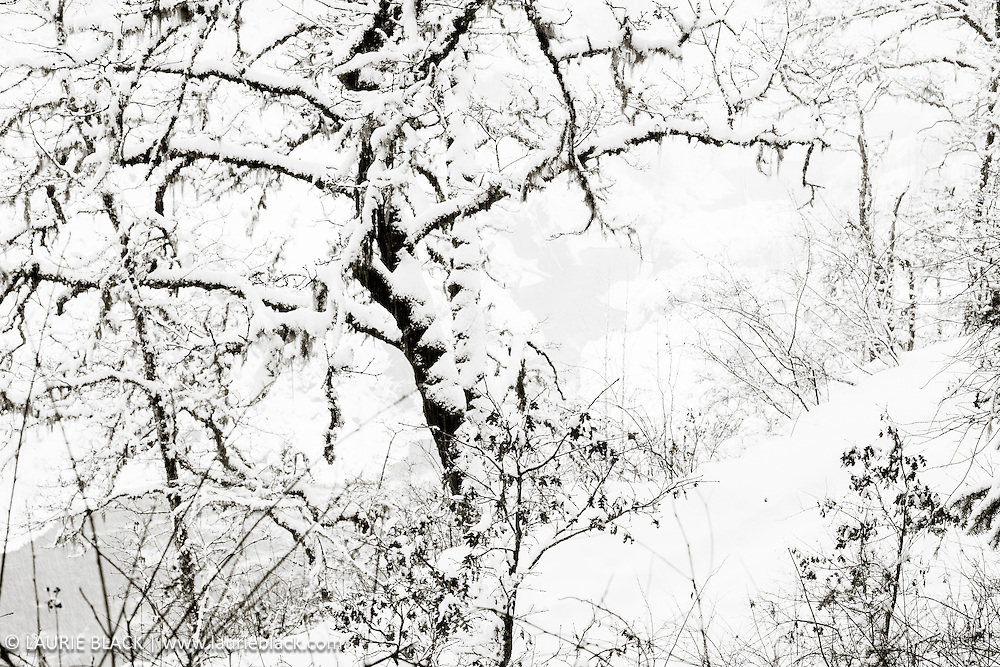 B&W winter landscape fine art photo 3
