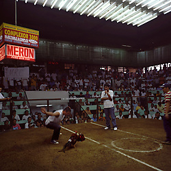 """A cock fighting competition in progress in Cavite, Philippines on Dec. 2006. The competition is the main event on a weekday afternoon not far from the home of Teresita """"Tita"""" and Demetrio Comodaz """"Emmet"""".  New found prosperity comes with a hefty price for many Filipino workers, as many of them get sucked into gambling and alcoholism from the loneliness acquired from years abroad. Often workers will get put in jail for holding illegal cock fights in the more conservative host countries, such as Saudi Arabia. Cock fighting is a common and legal sport in the Philippines and can even be seen as televised events."""