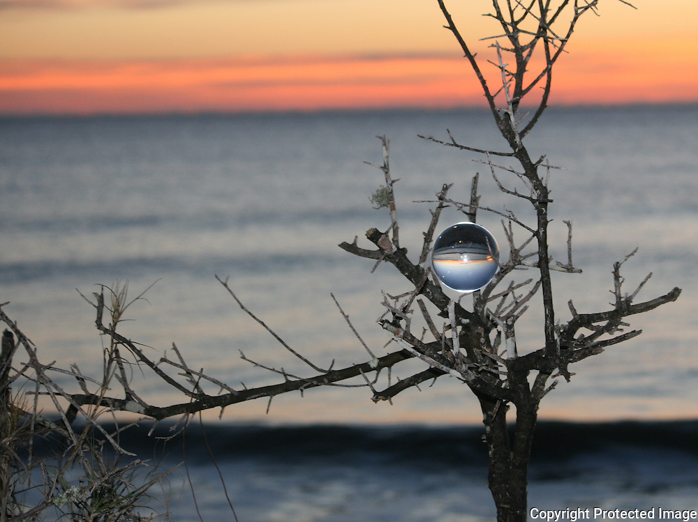 Crystal ball perched in the branches of a small tree near a Jekyll Island beach at sunrise, sunset