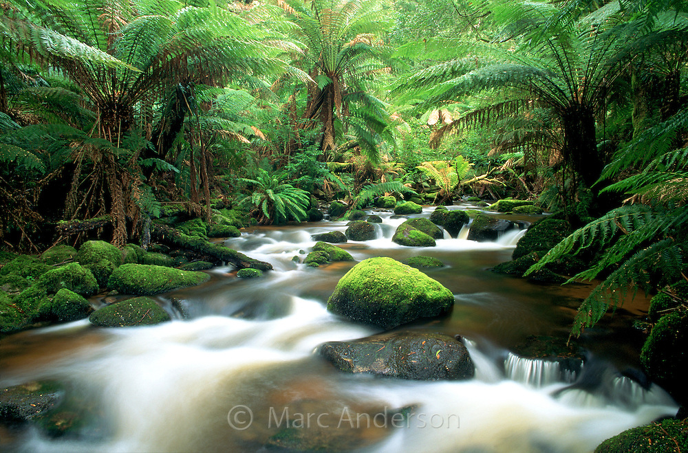 A creek in a lush rainforest, near St Columba Falls, Tasmania.