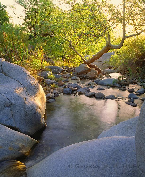 0147-1007 ~ Copyright: George H. H. Huey ~ Madera Creek and Canyon with Arizona sycamores [Pltanus wrightii]. Santa Rita Mountains. Coronado National Forest, Arizona.