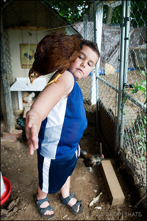 Boy with bird in chicken coop