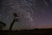 Star trail, southern cross, Brazil; Mato Grosso; Pantanal