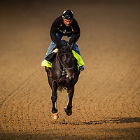 April 30, 2014: Dance With Fate gallops in preparation for the Kentucky Derby at Churchill Downs in Louisville Ky. Alex Evers/ESW/CSM