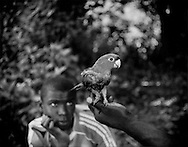 Young Saamaka Maroon man watches a tamed parrot held by a friend near the Boven Suriname (Upper Suriname River) village of Djumu.  Suriname.   The Saamaka obtain their subsistence from the surrounding rainforest and the pristine rivers that flow through it.  Legends, called ?First Time? chronicle the oral history of their flight from slavery along the coast and the journey to build a free African society but elders only share such tales with a chosen few young Saamakas who will one day pass them on to the next generation.