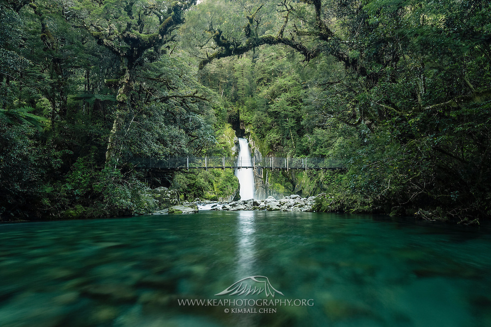 ... into an emerald river, deep in the forests of Fiordland National Park