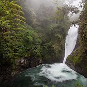 Cloudbridge Nature Reserve adjacent to Chirripo National Park, Costa Rica.