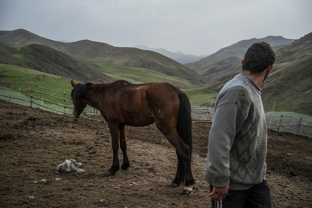 VANK, NAGORNO-KARABAKH - APRIL 22: Gevorg Akulyan, 24, looks back at a Karabakh horse, a breed originally developed in the region which is now faced with extinction, on a farm in the mountains on April 22, 2015 near Vank, Nagorno-Karabakh. Since signing a ceasefire in a war with Azerbaijan in 1994, Nagorno-Karabakh, officially part of Azerbaijan, has functioned as a self-declared independent republic and de facto part of Armenia, with hostilities along the line of contact between Nagorno-Karabakh and Azerbaijan occasionally flaring up and causing casualties. (Photo by Brendan Hoffman/Getty Images) *** Local Caption *** Gevorg Akulyan