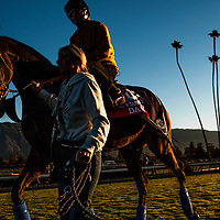 Dank, trained by Sir Michael Stoute, trains for the Breeders' Cup Filly & Mare Turf at Santa Anita Park in Arcadia, California on October 31, 2013. (Alex Evers/ Eclipse Sportswire)