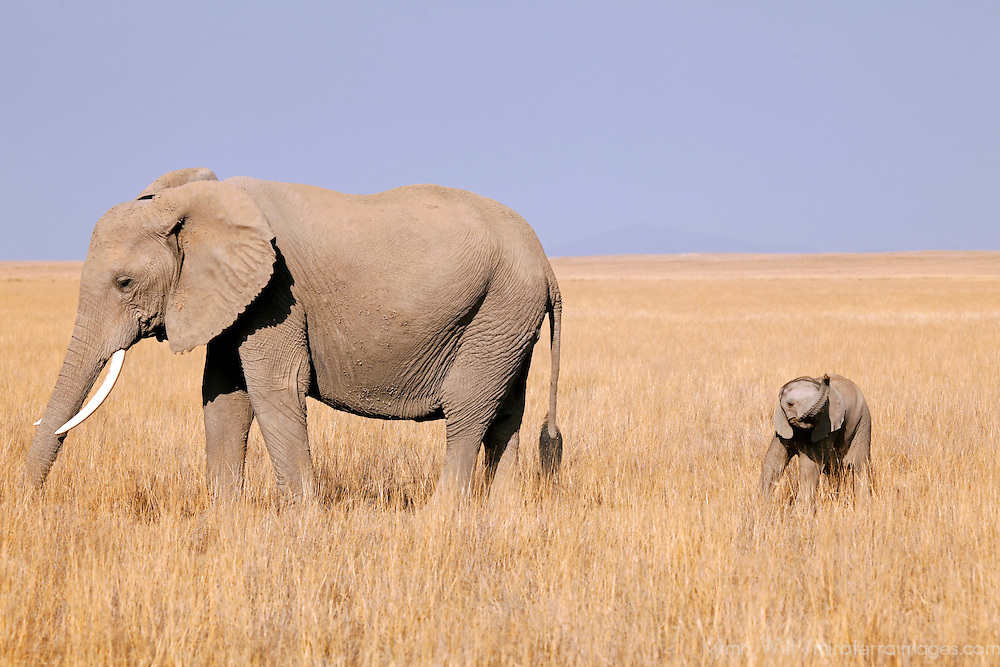 Africa, Kenya, Amboseli. Mother and baby elephant of Amboseli.