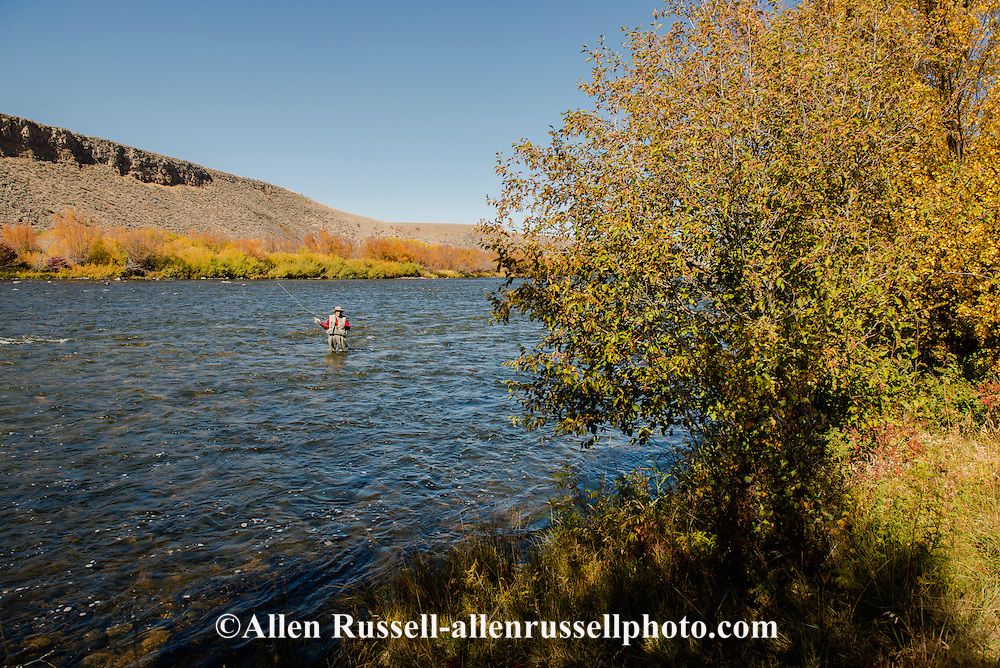 Madison River, fly fisherman, Palasades area, south of Ennis, Montana