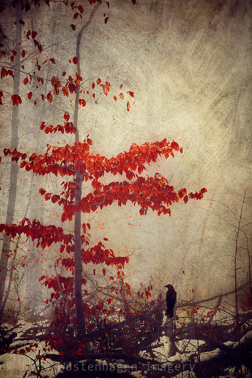 small tree with vivid red leaves on a misty winter day - textured photograph<br /> Products: https://society6.com/product/make-the-best-of-it_print#1=45