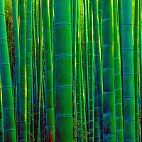 Bamboo forest near Nara, Japan