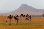 "Chapada dos Veadeiros National Park, Brazilian HIghlands, Goias State, Brazil: Savanna biome (called  cerrado in Brazil): Vereda, a treeless grassland ecosystem on semi-waterlogged soil with stands of buriti palms (Mauritia flexuosa) in wet depressions or along streams, in  in valley between hills and plateaus. ""Jardim be Maytreia"""