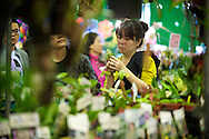 Many different kinds of flowers and plants can be found at the Taipei Flower Market.