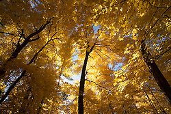 Canopy of trees at Interstate Park (Wisconsin side)during the autumn
