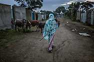 A local Oromo woman moves her cattle through the quiet backstreets of Shashemene.  Ethiopia.