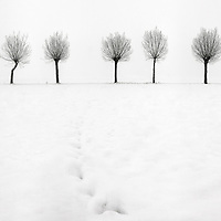 Snow in the ground and hazy atmosphere are just the best conditions for highly graphical and minimalist photos such as this one. I took this picture in the fields around my home town of Scalenghe in Piedmont, Italy, on a cold morning at the middle of Decemeber, under a heavy snowfall.