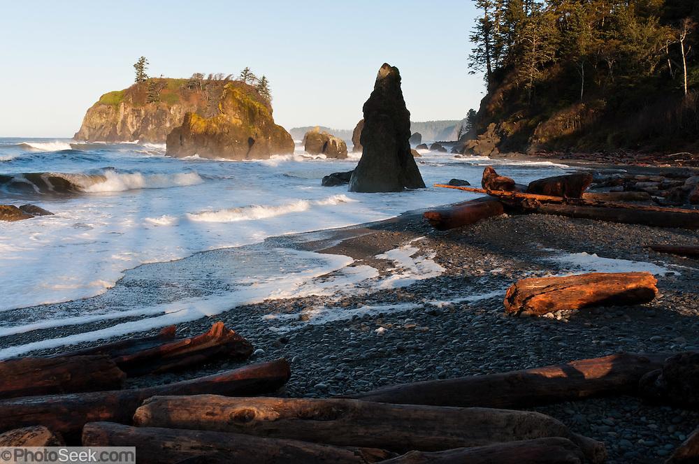 Sea stacks, surf, driftwood, coastal forest at Ruby Beach, Olympic National Park, Washington, USA. Sunrise casts long shadows of tree trunks on the pebbled beach.