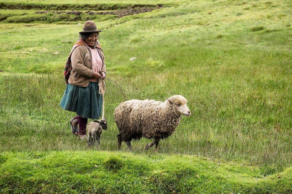 South America, Andes, Peru, Tambomachay, Cusco Province, Cusco District, near Cusco, woman herding sheep