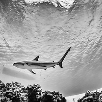 On Assigment: Bahamas Underwater Photo Week 2014