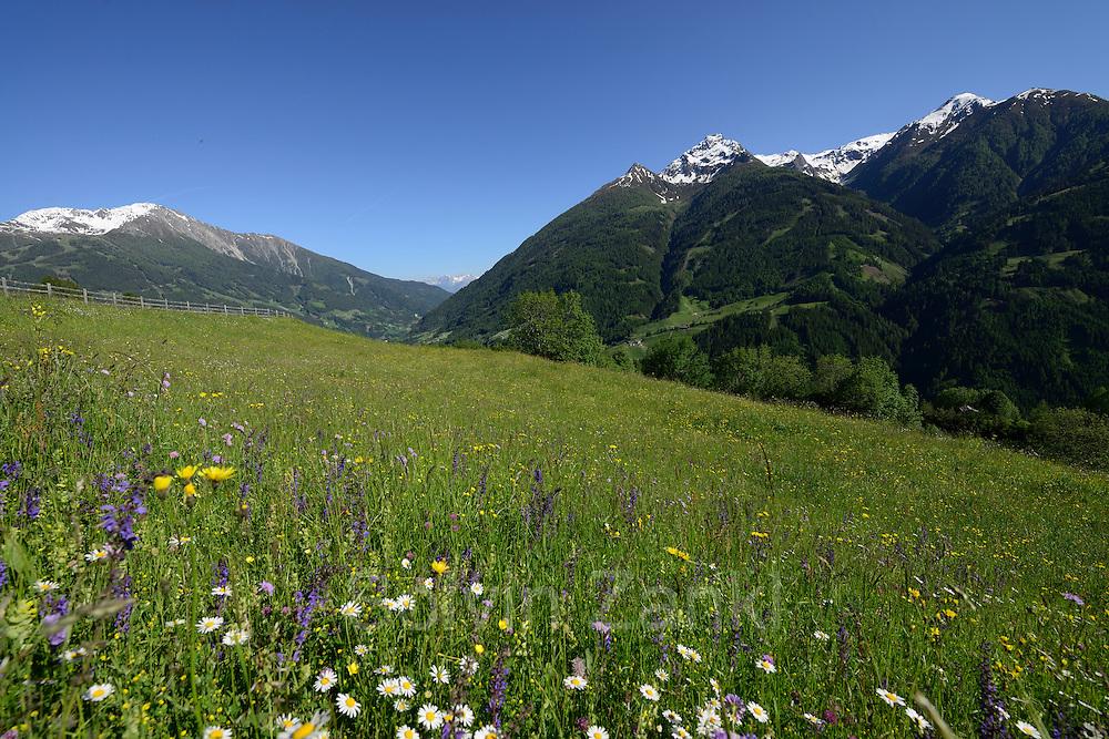 Mountain pastures. Matrei in East Tyrol, Austria.   Almwiesen, Matrei in Osttirol, Österreich.