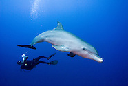 Diving with Dolphins on Curacao, Netherlands Antilles