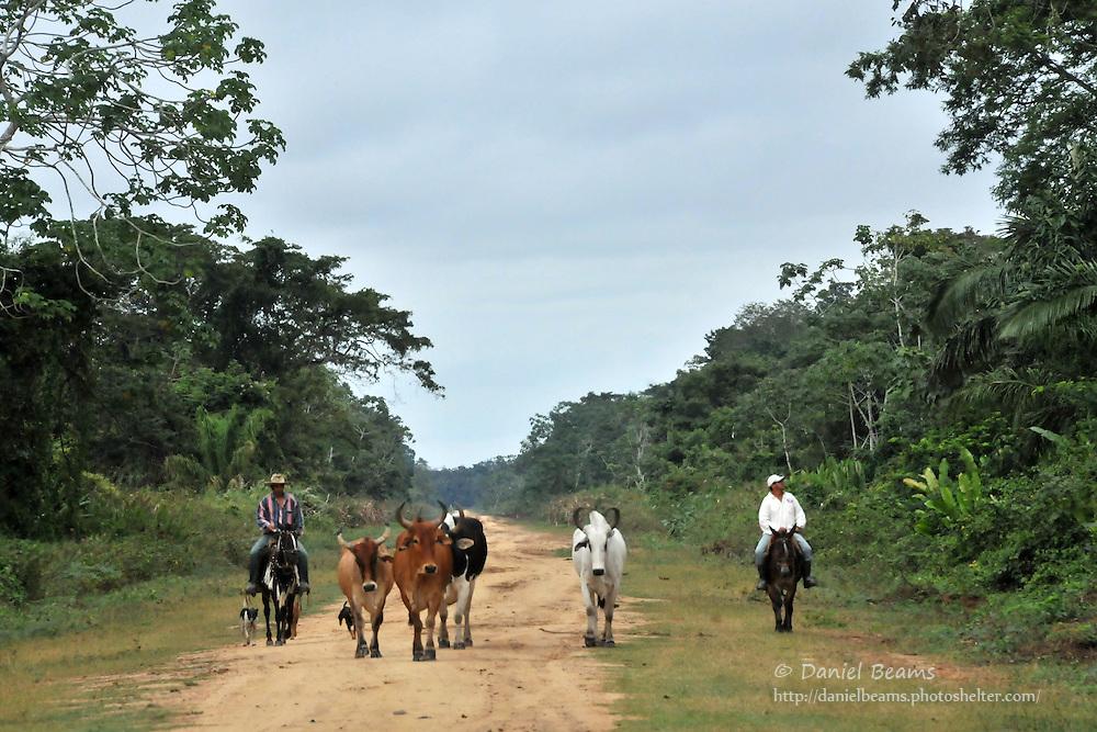 Cowboys on the road near San Ignacio de Moxos, Beni, Bolivia