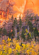 The colors of autumn in Zion National Park.