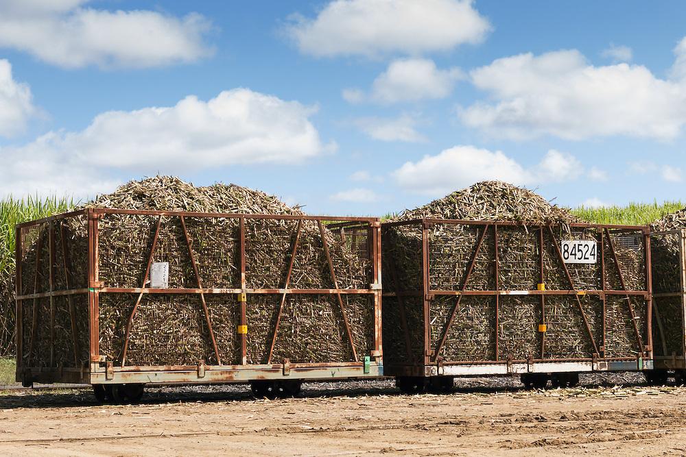 harvested sugar cane train ready for crushing under cumulus cloud in Kuttabul, Queensland, Australia