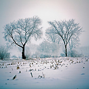 A winter fog blankets farm fields off of Hwy 151 north of Columbus, Wisconsin. ..