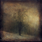 Lone tree shrouded in fog on a winter day - vintage style textured photo <br />