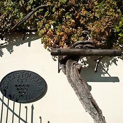 Stara trta e museo,  la vite più antica del mondo, iscritta nel libro Guinness dei primati.Telefono : ++386 2 251 51 00  E-mail : stara-trta@maribor.si