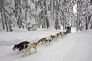 Mt. Bachelor Sled Dog Tours