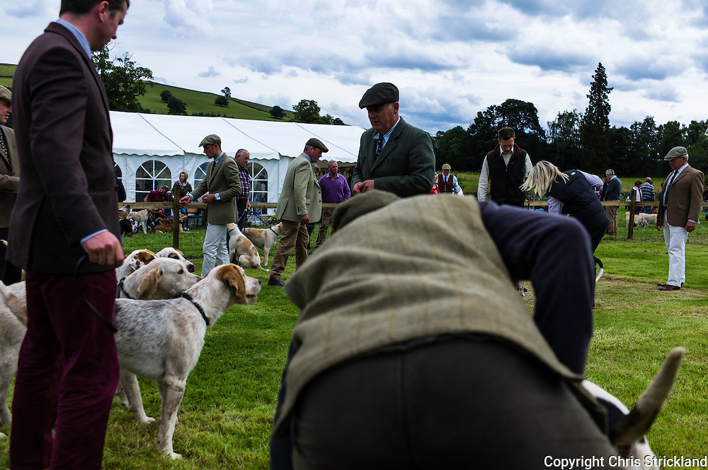 The Wells, Bedrule, Bonchester Bridge, Hawick, UK. 26th July 2015. The Jedforest Hunt Hound, Terrier & Lurcher show in the countryside of the Scottish Borders brings together a plethora of people in a celebration of their hunting breeds. Here foxhounds from Scotland & the north of England are judged.