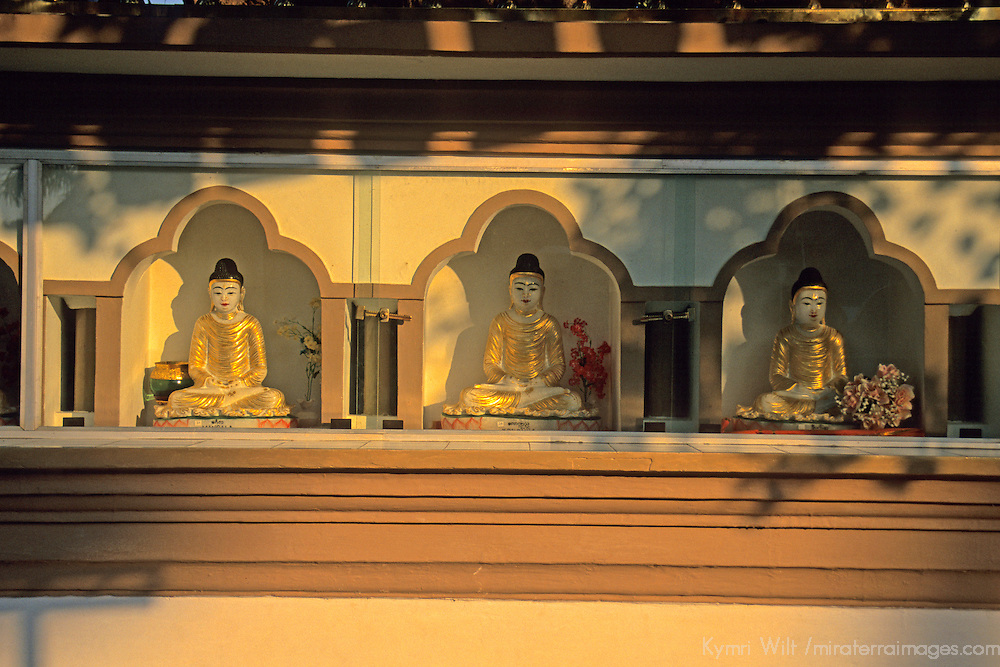 Asia, India, Sarnath. Golden Buddhas at Deer Park in Sarnath.