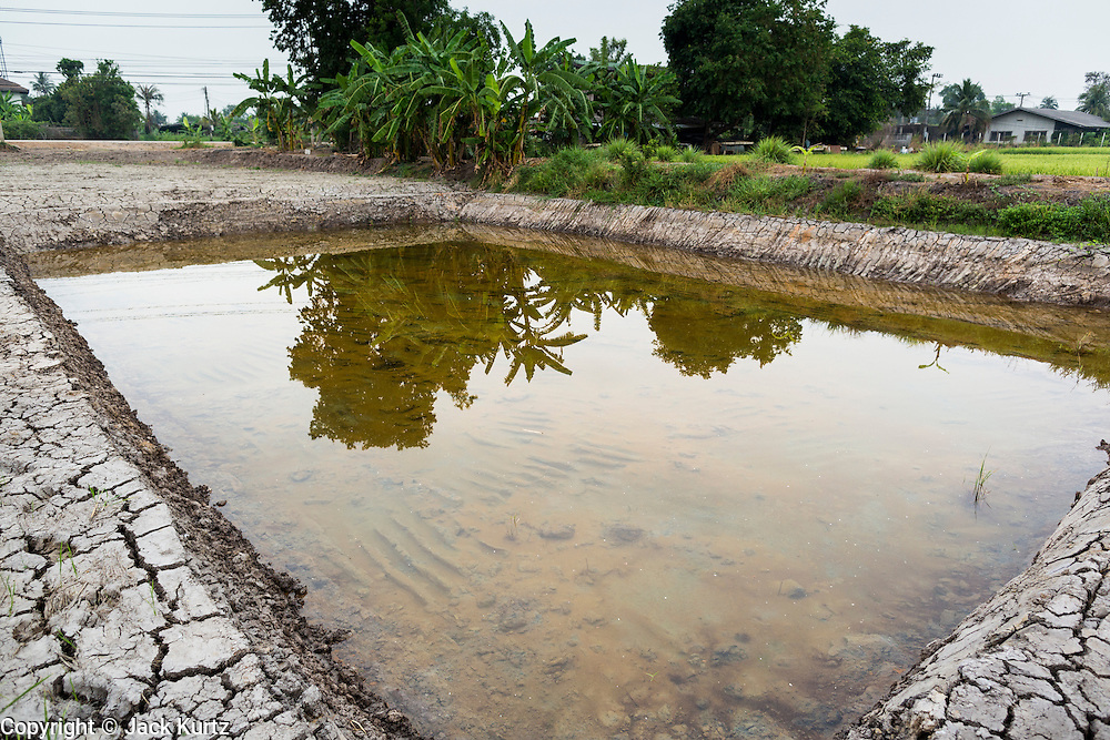 17 MARCH 2014 - BUNG KHAM PROI, PATHUM THANI, THAILAND:  A nearly empty fish pond in Pathum Thani province. It hasn't rained in central Thailand in more than three months, impacting agriculture and domestic water use. Many farms are running short of irrigration water and salt water from the Gulf of Siam has come up the Chao Phraya River and infiltrated the water plants in Pathum Thani province that serve Bangkok.  PHOTO BY JACK KURTZ