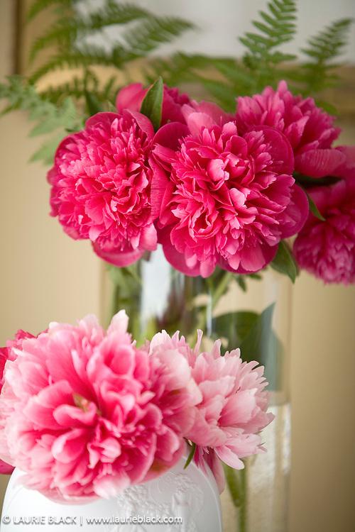 Peonies in vases.