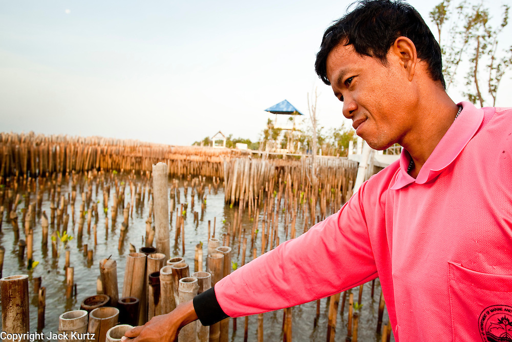 01 MAY 2010 - SAMUT SAKHON, THAILAND: A villager looks over the bamboo sea wall in Samut Sakhon. The wall doesn't actually hold the sea back, but it blunts the force of waves slamming into the shore and slow the rising sea level in the area. The bamboo sea wall is being used in connection with mangrove replanting to claim land lost to rising seal levels.  PHOTO BY JACK KURTZ