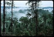 ECUADOR 20401: RAINFOREST RESCUE
