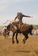 Saddle bronc rider makes successful ride at Miles City Bucking Horse Sale