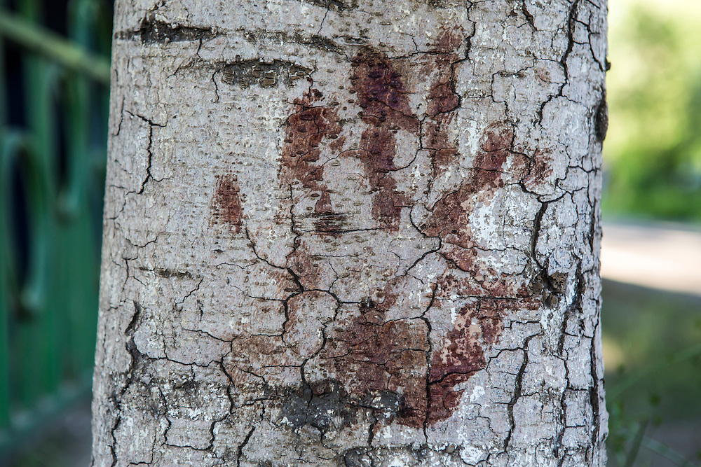 MARIUPOL, UKRAINE - MAY 10: A bloody handprint is still visible on a tree a day after deadly clashes at a local police station on May 10, 2014 in Mariupol, Ukraine. A referendum on greater autonomy is planned for the region tomorrow. (Photo by Brendan Hoffman/Getty Images) *** Local Caption ***