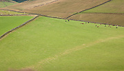 Fields Near Traquair, Southern Uplands, Scotland