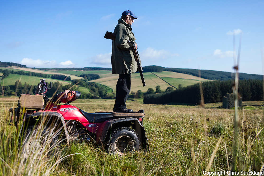 Southdean, Chesters, Hawick, Scottish Borders, UK. 19th September 2015. A marksman waits on top of a quad bike for a fox to break covert during an organised hunt in Scotland.