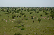 The Boma-Jonglei Landscape is home to some of the most spectacular and important wildlife populations, including  perhaps the largest wildlife migration in the world. An annual migration of  antelope called the white-eared kob may rival the famous wildebeest migration of the Serengeti in Kenya and Tanzania.  (PHOTO: MIGUEL JUAREZ LUGO)