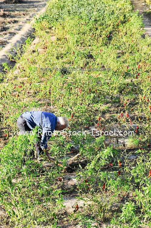 Spanish farmers works in his field. Photographed near Girona, Catalonia, Spain