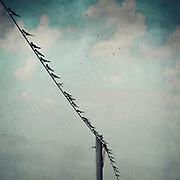 Swallows sitting on a power line. Textured photography