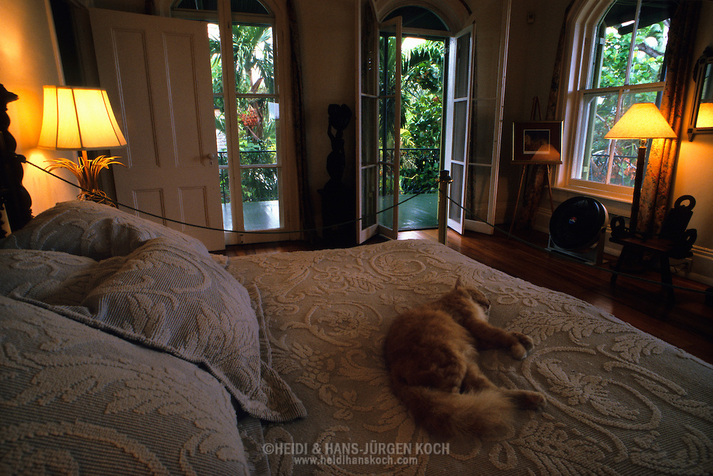 Domestic cat felis catus domesticus felidae archibald - Amerika schlafzimmer ...