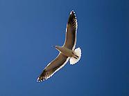 Birds fly over San Pedro