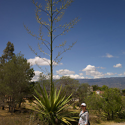 Agave-like plant with huge spike in Villa de Leyva, Boyacá, Colombia.